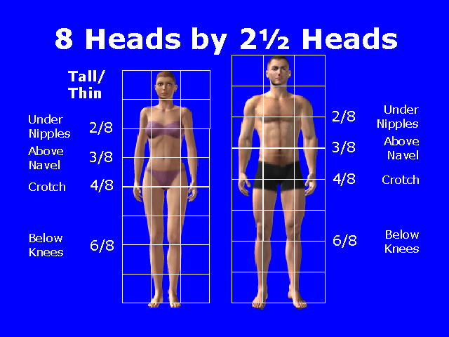 Mimidolls Free Video Tutorial Anatomy Scale Proportion